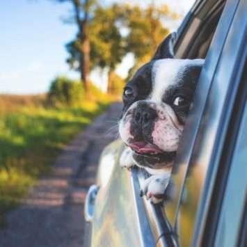 Tips voor een heerlijke vakantie met je hond